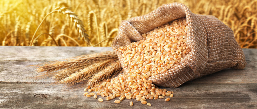 Still,Life,Scattered,Grains,Of,Bulgur,And,Ears,Of,Wheat